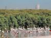 أشهر محميات طبيعية في الامارات بالتفصيل